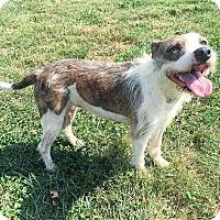 Adopt A Pet :: Izzy - Russellville, KY