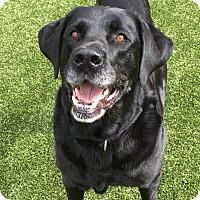 Adopt A Pet :: ABBY - Okatie, SC