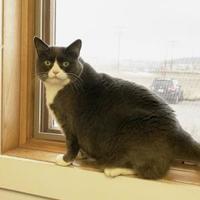 Adopt A Pet :: Buddha - Livingston, MT