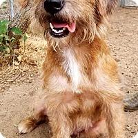 Adopt A Pet :: Danaerys - Aurora, CO