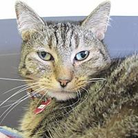 Adopt A Pet :: Pickles - Cumberland, ME