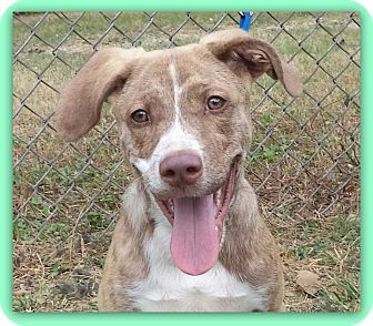 Plott Hound Mix Puppy for adoption in Marietta, Georgia - BACARDI