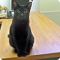 Adopt A Pet :: Cabbage - Secaucus, NJ
