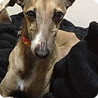 Adopt A Pet :: Rico - SD - Costa Mesa, CA