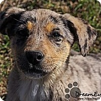 Adopt A Pet :: Rudy - Dallas, TX