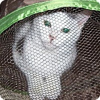 Adopt A Pet :: Louie - Richmond, VA