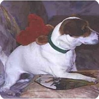 Adopt A Pet :: Ringo - Scottsdale, AZ