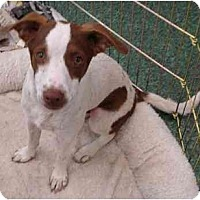 Adopt A Pet :: Parker - Fowler, CA