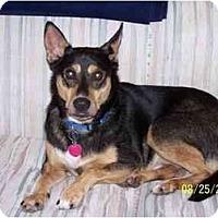 Adopt A Pet :: Auggie - York, SC