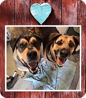 German Shepherd Dog/Mastiff Mix Dog for adoption in Sharon Center, Ohio - Mary Jane