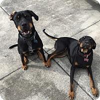 Adopt A Pet :: Titan - Orlando, FL