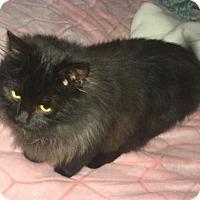 Adopt A Pet :: Winnie - Greensboro, NC