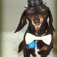 Adopt A Pet :: Claus - Omaha, NE