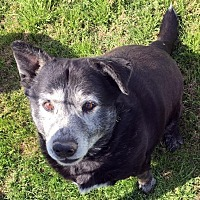 Adopt A Pet :: Rufus - Quinlan, TX