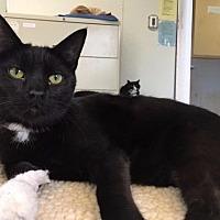 Adopt A Pet :: Sirus - Cumberland, ME
