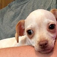 Adopt A Pet :: Sebastian - SOUTHINGTON, CT