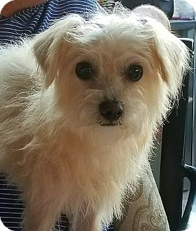 Terrier (Unknown Type, Small) Mix Dog for adoption in San Diego, California - Dory