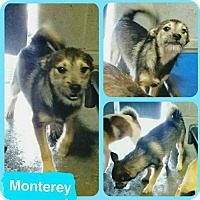 Adopt A Pet :: Monterey - Westminster, CO