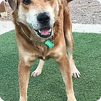 Adopt A Pet :: Einstein - Phoenix, AZ
