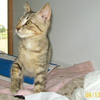 Adopt A Pet :: Daphne - Mexia, TX