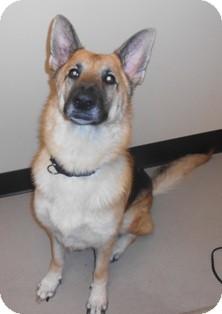 German Shepherd Dog Mix Dog for adoption in Bellingham, Washington - Sasha