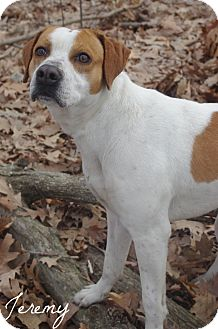Hound (Unknown Type) Mix Dog for adoption in Poland, Ohio - JEREMY // 3 (ADOPTED)