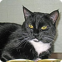 Adopt A Pet :: Cookie - Quincy, MA