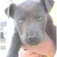 Adopt A Pet :: Abel - Adamsville, TN