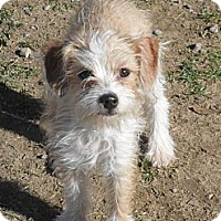 Adopt A Pet :: Sonny #5231 - Jerome, ID