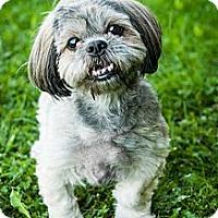 Adopt A Pet :: Spenser - Toronto, ON