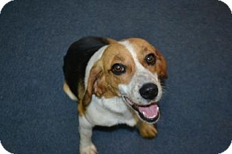 Beagle Mix Dog for adoption in Edwardsville, Illinois - Penny