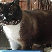 Adopt A Pet :: Bear - Duncan, BC