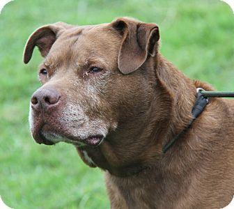 Labrador Retriever Mix Dog for adoption in Marietta, Ohio - Oboe (Neutered)-Photos 10/8/16