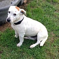 Adopt A Pet :: Rio - springtown, TX