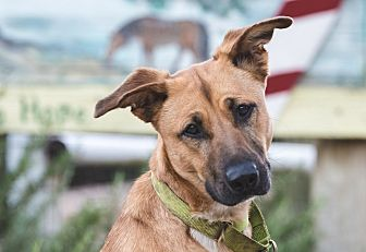 Mixed Breed (Medium) Mix Dog for adoption in Lompoc, California - Red