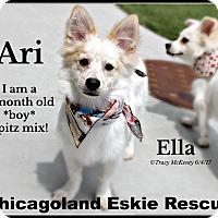 Adopt A Pet :: Ari & Ella - Elmhurst, IL