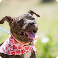 Adopt A Pet :: Katinka - La Jolla, CA