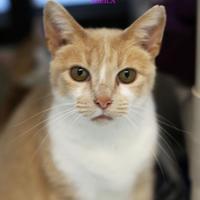 Adopt A Pet :: Sheila - Boone, NC