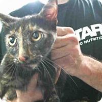 Adopt A Pet :: ANASTASIA - Pasadena, TX