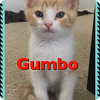 Adopt A Pet :: Gumbo - San Fernando Valley, CA