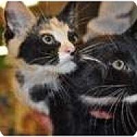 Adopt A Pet :: Cecil - Putnam Valley, NY