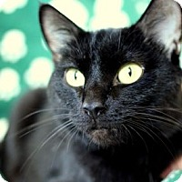 Adopt A Pet :: Indy - Colorado Springs, CO