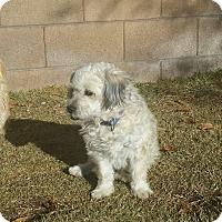 Adopt A Pet :: Ajax - Tucson, AZ