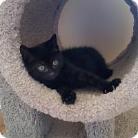 Adopt A Pet :: Elliot - Turnersville, NJ