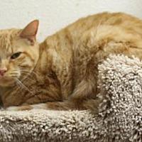 Adopt A Pet :: Lavern - Orland, CA