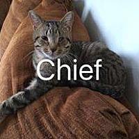 Adopt A Pet :: CHIEF - Davison, MI