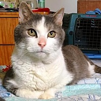 Adopt A Pet :: Peanut - Harrisburg, PA