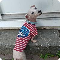 Adopt A Pet :: Charlie the street dog! - Oak Ridge, NJ