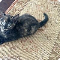 Adopt A Pet :: Adalyn - Shelbyville, KY