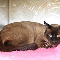 Adopt A Pet :: *HAMPSHIRE* - Salt Lake City, UT
